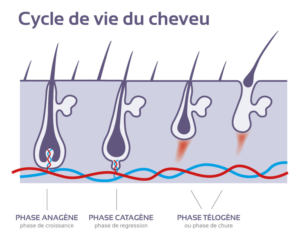 cycle_cheveux